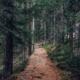Kuvassa metsäpolku
